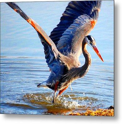 Blue Heron Metal Print by Sumoflam Photography