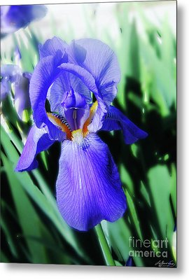 Blue Iris 2 Metal Print by Lizi Beard-Ward
