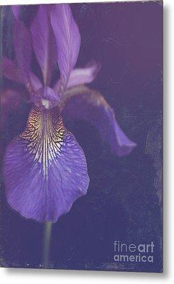 Blue Iris Metal Print by Lyn Randle