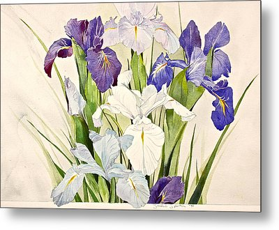Blue Irises-posthumously Presented Paintings Of Sachi Spohn  Metal Print
