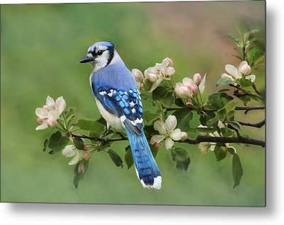 Blue Jay And Blossoms Metal Print by Lori Deiter