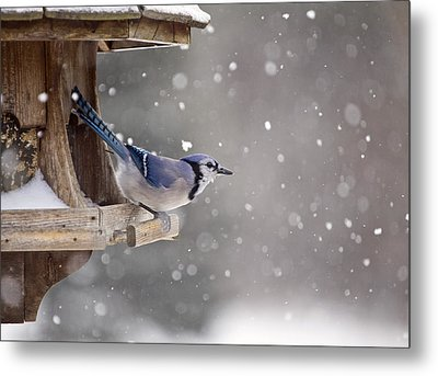 Blue Jay At Bird Feeder Winter Metal Print