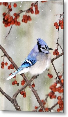 Blue Jay In Snowfall 3 Metal Print by Betty LaRue