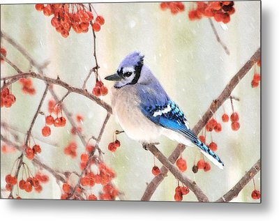 Blue Jay In Snowfall Metal Print by Betty LaRue