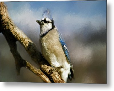 Blue Jay Metal Print by Lana Trussell