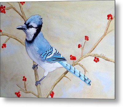 Blue Jay Metal Print by Laurel Best