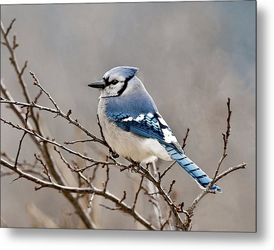 Blue Jay Way Metal Print by Lara Ellis