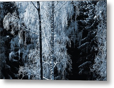 Blue Nature Winter Scenery Metal Print by Christian Lagereek