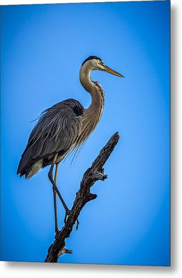 Blue On Blue Metal Print by Marvin Spates