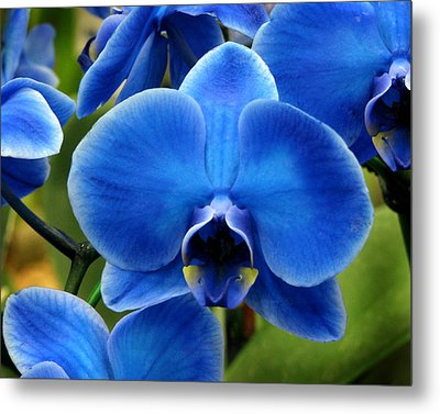 Blue Orchid Metal Print by Peg Urban
