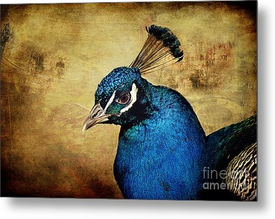 Blue Peacock Metal Print by Angela Doelling AD DESIGN Photo and PhotoArt