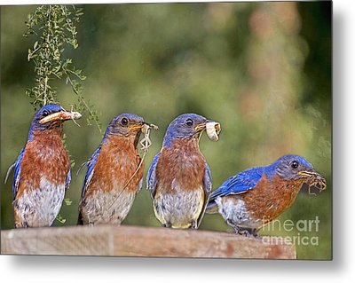 Blue Plate Lunch Special Metal Print by Bonnie Barry