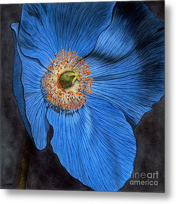 Blue Poppy Metal Print by Lawrence Supino