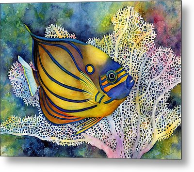 Blue Ring Angelfish Metal Print