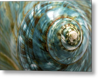 Blue Seashell Metal Print