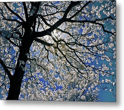 Metal Print featuring the photograph Blue Skies Smiling At Me by Linda Unger