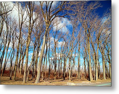 Metal Print featuring the photograph Blue Sky And Trees by Valentino Visentini