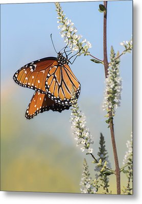 Metal Print featuring the photograph Blue Sky Dancer  by Julie Andel