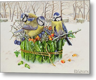 Blue Tits In Leaf Nest Metal Print by EB Watts
