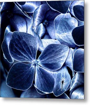 Blue Velvet Metal Print by Darlene Kwiatkowski