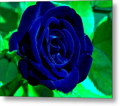 Blue Velvet Rose Metal Print