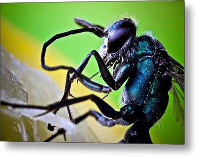 Blue Wasp On Fruit Metal Print by Ryan Kelly