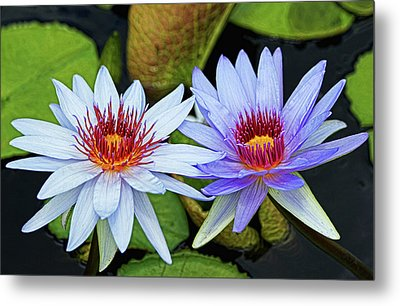 Metal Print featuring the photograph Blue Water Lilies by Judy Vincent