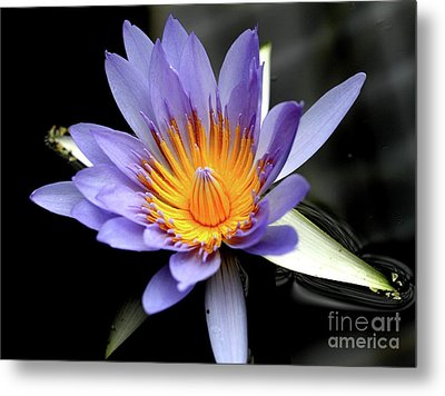 Blue Water Lily Pond Flower . 7d5726 Metal Print by Wingsdomain Art and Photography