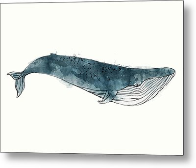 Blue Whale From Whales Chart Metal Print by Amy Hamilton