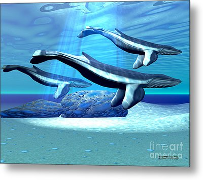 Blue Whale Sanctuary Metal Print by Corey Ford