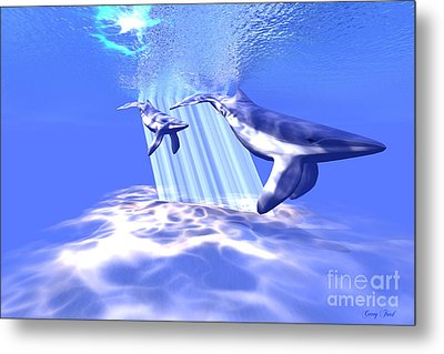 Blue Whales Metal Print by Corey Ford