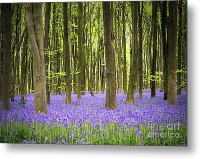 Bluebell Carpet Metal Print by Jane Rix