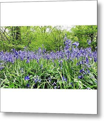 #bluebell #flowers #spring  #woodland Metal Print by Natalie Anne