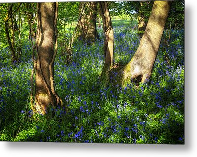 Bluebells In The New Forest Metal Print