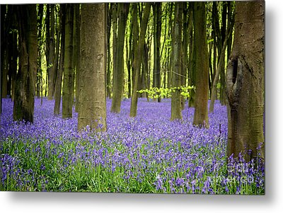 Bluebells Metal Print by Jane Rix