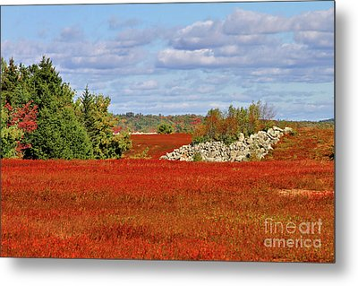 Metal Print featuring the photograph Blueberry Field by Debbie Stahre
