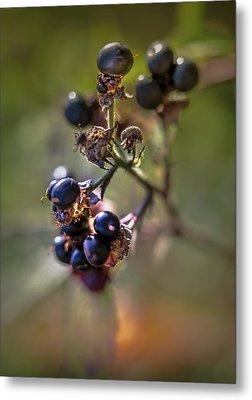 Blueberry Nr.1 Metal Print by Mah FineArt