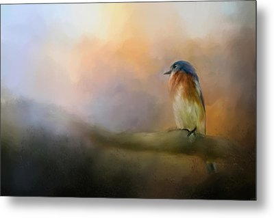 Bluebird In The Perfect Light Metal Print