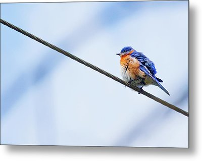 Metal Print featuring the photograph Bluebird Of Happiness by Linda Unger