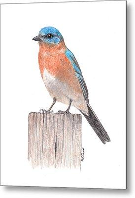 Bluebird On Post Metal Print