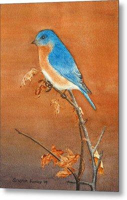 Bluebird Metal Print by Sharon Farber