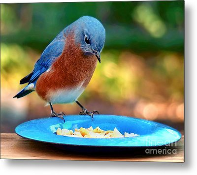 Metal Print featuring the photograph Bluebird's Dinner by Sue Melvin