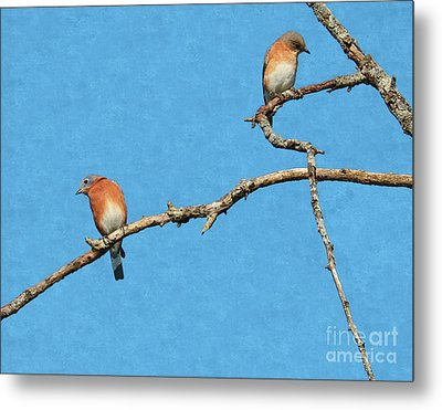 Bluebirds On A Crazy Limb Metal Print