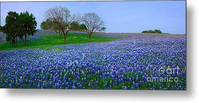 Bluebonnet Vista - Texas Bluebonnet Wildflowers Landscape Flowers  Metal Print by Jon Holiday