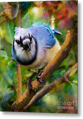 Bluejay Metal Print by Betty LaRue
