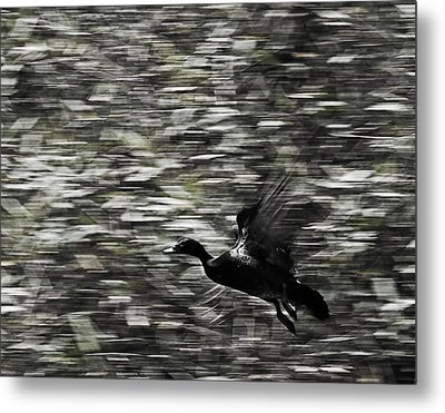 Metal Print featuring the photograph Blurry Bird by Ron Dubin