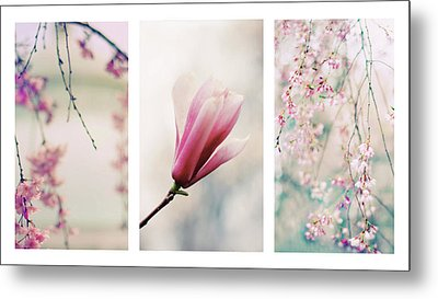 Metal Print featuring the photograph Blush Blossom Triptych by Jessica Jenney