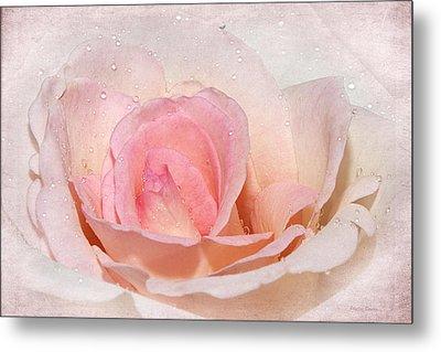 Blush Pink Dewy Rose Metal Print by Phyllis Denton
