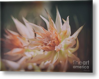 Metal Print featuring the photograph Blushing Bride by Linda Lees
