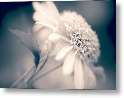 Metal Print featuring the photograph Blushing Mum by Julie Palencia